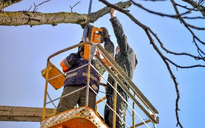 The Pruning Season Is Almost Here