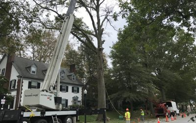 Tree services for Chester county and Delaware county