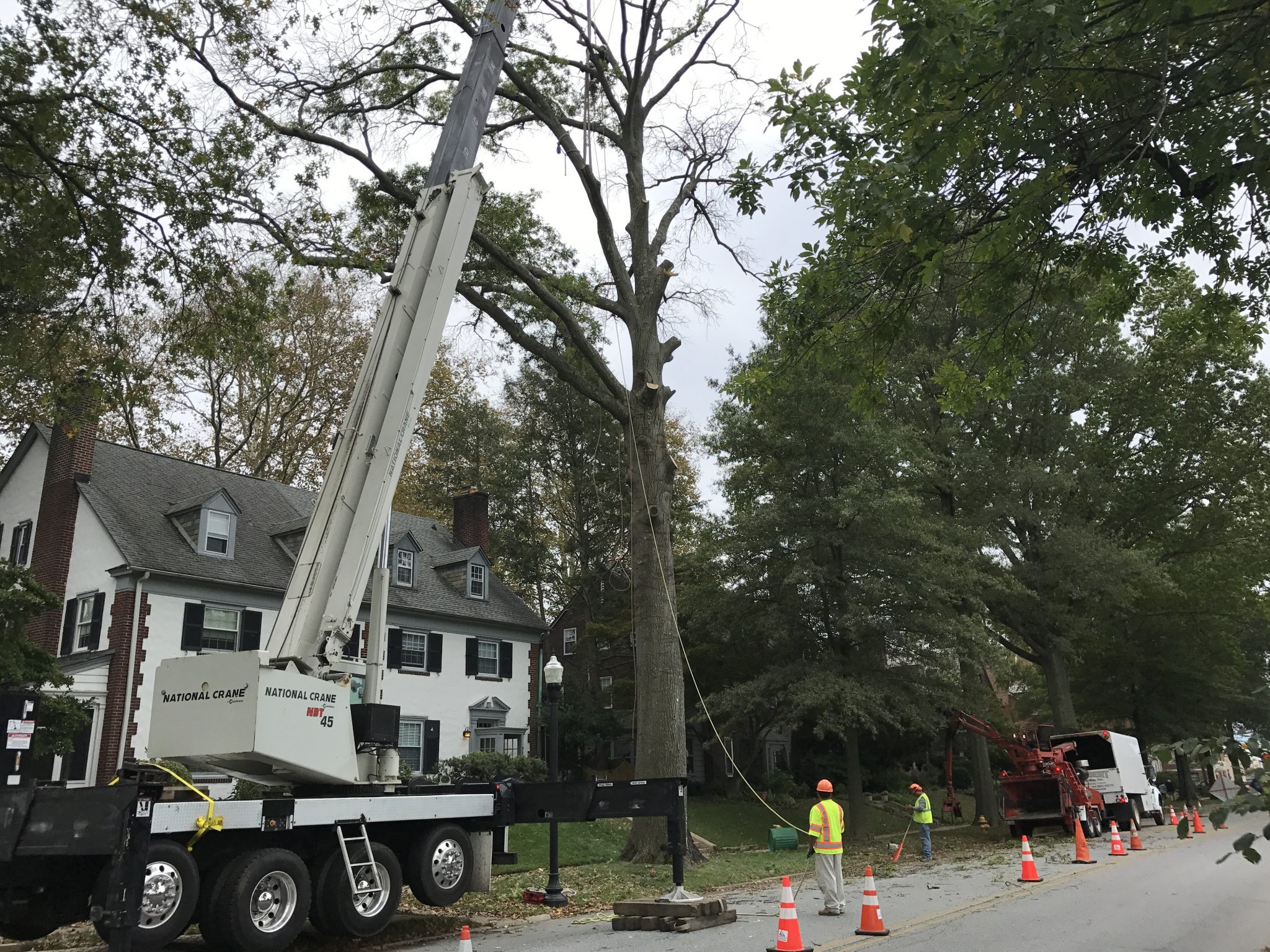 Tree cutting services in Delaware County and Chester County.