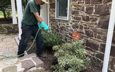 Do What Your Trees Need Doing This Spring