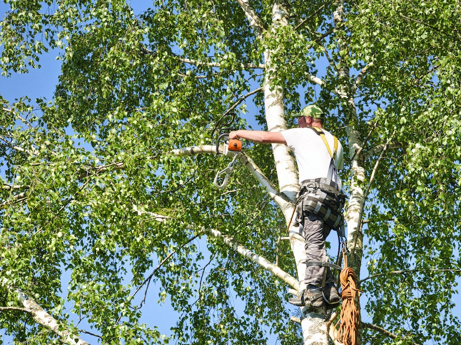 Tree Pruning the Year Round